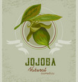 jojoba plant logo vector image vector image