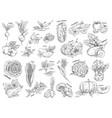 sketch of vegetarian food vegetables vector image vector image