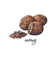 whole and ground fragrant nutmeg with caption vector image