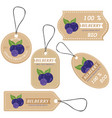 labels with various fruitsfor bilberry vector image vector image