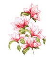 magnolia flower in beautiful blossom vector image