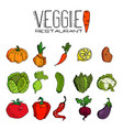 set of various hand drawn vegetables sketches of vector image