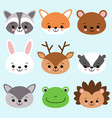 cute cartoon anomals fox raccoon bear bunny vector image