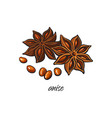 flat sketch dry anise star with seeds vector image vector image