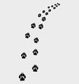 footprints dog vector image vector image