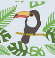 wild toucan seamless pattern vector image