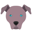 american pit bull terrier avatar vector image
