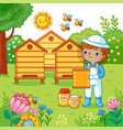 boy collects honey vector image
