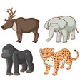 isolated picture different animals vector image vector image