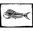 mahi fish 1 vector image vector image