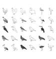 types of birds monochromeoutline icons in set vector image vector image