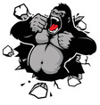 angry gorilla breaking the wall vector image vector image