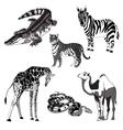 giraffe zebra crocodile vector image vector image