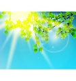 Green leaves with sun ray vector image