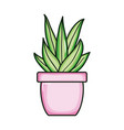 plant nature in ceramic pot vector image