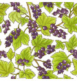 black currant pattern vector image