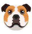 isolated bulldog avatar vector image vector image