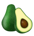 whole and cut in half avocado vector image vector image