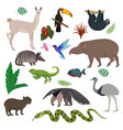 animal in south america wild animalistic vector image