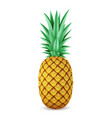 bright realistic pineapple isolated on white vector image vector image