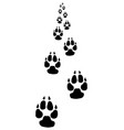 footprints of dog vector image vector image
