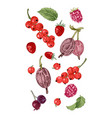hand drawn berries on white background vector image vector image