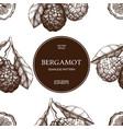 Seamless pattern with ink hand drawn bergamot
