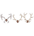 set of different deer antlers vector image vector image