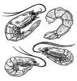 set shrimps for poster menu banner emblem sign vector image vector image
