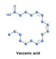 vaccenic octadecenoic acid vector image vector image