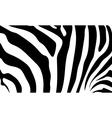 Zebra skin vector image vector image