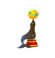 circus seal playing with yellow ball on red round vector image vector image