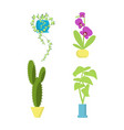 house growing potted vector image vector image