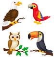 Bird cartoon collection vector image vector image