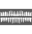 set of human teeth dental template vector image vector image
