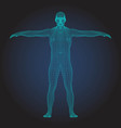 3d wireframe human body t-pose front view vector image