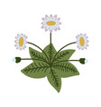 decorative isolated daisy vector image vector image