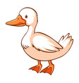 duck on white background vector image vector image