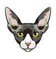 sphynx cat face cartoon vector image vector image