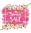 spring sale background with blossom cherry vector image vector image