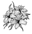 lily flower engraving style vector image