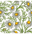 chamomile flower pattern vector image vector image
