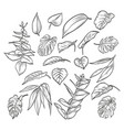 hand drawn elegant leaves vector image vector image