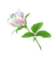 rosebud multicolor rose twig with leaves vector image vector image