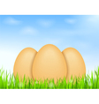 Eggs in Grass vector image vector image