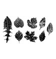 ink leaf prints vector image