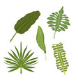 white background with set types of tropical leaves vector image vector image