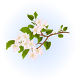 Apple tree branch with flowers nature background vector image vector image