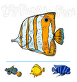 bright tropical sea fish vector image vector image