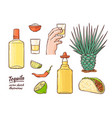glass tequila bottle sketch icon isolated vector image vector image